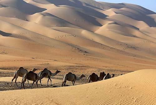 """坂井直樹の""""デザインの深読み"""": 砂漠の旅行者が何千年もの間やってきたように、リワのアラビア砂漠を駱で移動しながらのGoogleストリートビューの撮影。世界の果てまでストリートビュー?恐るべしGoogleの野望と行動。"""