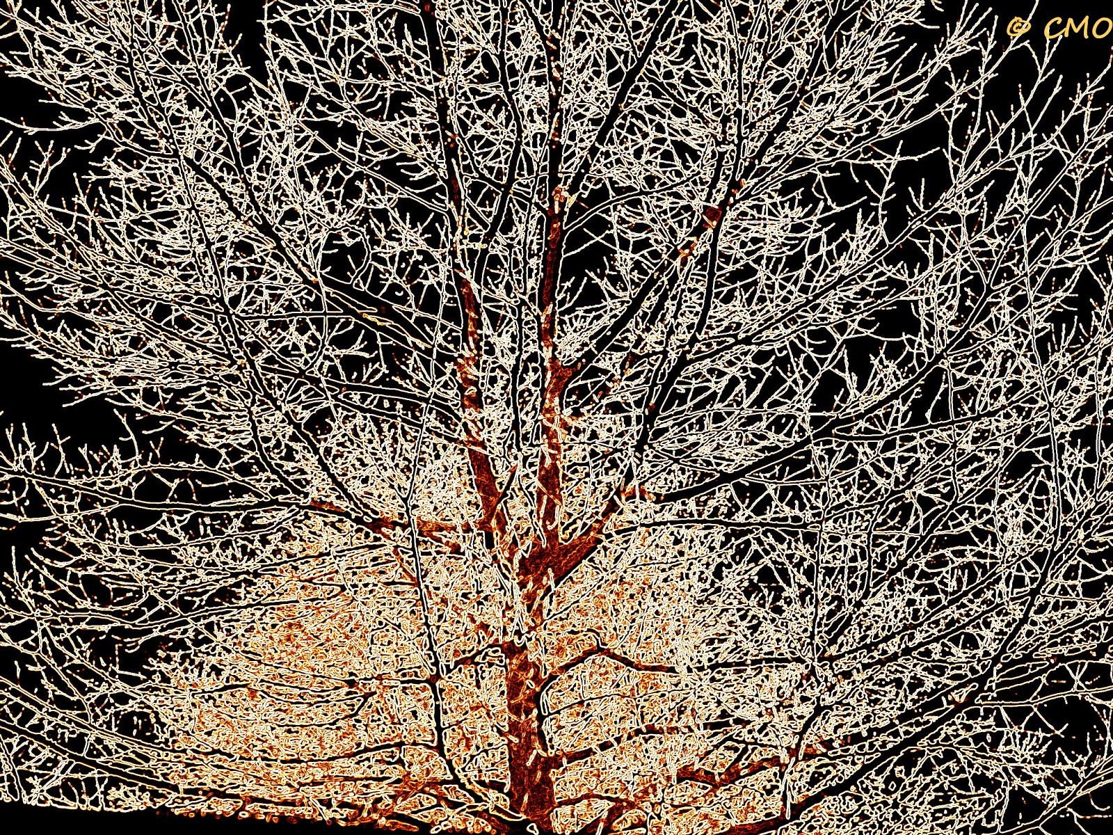 Fili - Baum