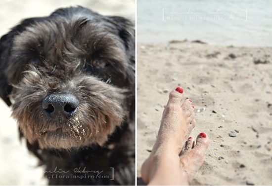 beach, dog, play on the beach, beach finds, treasures from the beach, dog on beach