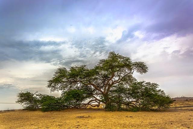 Tree of Life (Pohon Kehidupan)