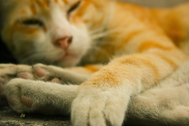 So very lazy by mada299 from flickr (CC-NC)