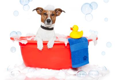 dog shampoo substitute