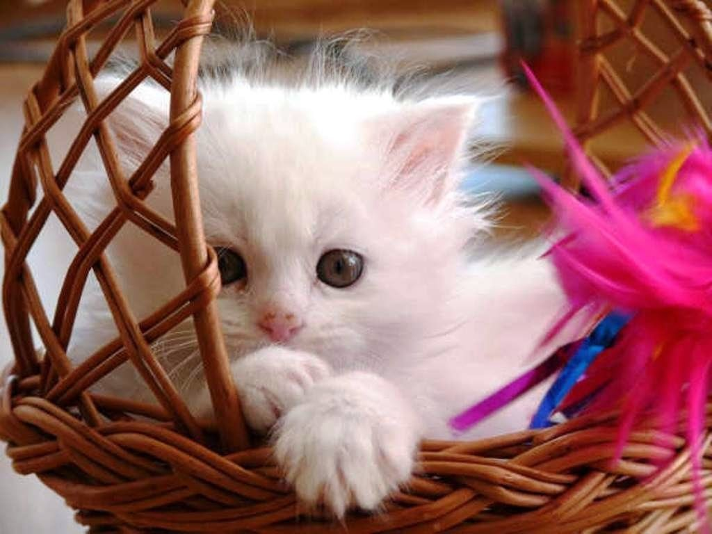 Makda lee Beautiful of kitten Funny Cats Videos and Cute Cats