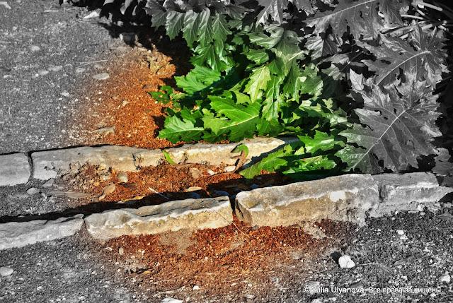 Ящерицы в парке. Задар. Хорватия (ищите в середине)