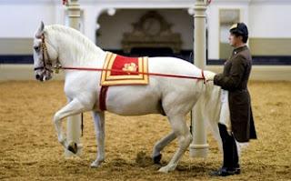 Escuela Española de Equitación - Viena