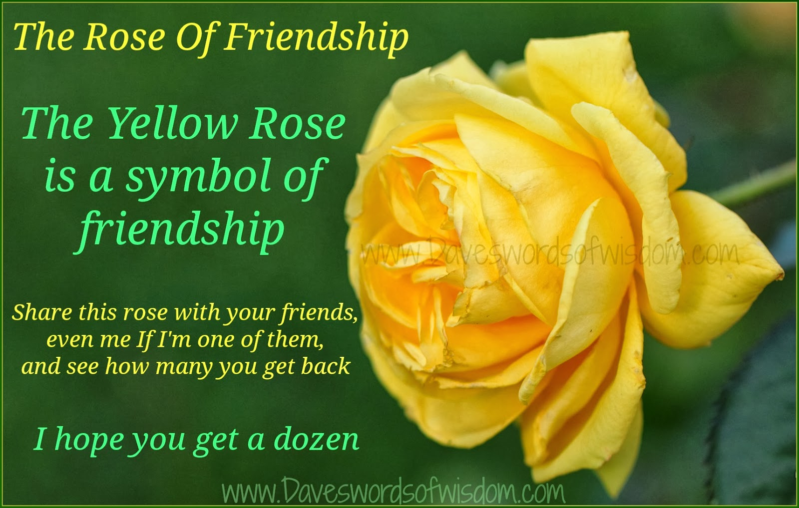 The gallery for blessed wednesday quotes for What color is the friendship rose