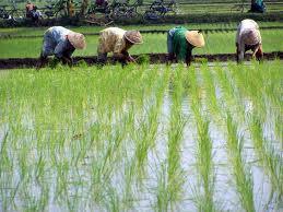 Pagar Museh Kuliah 1 Sektor Pertanian Di Malaysia