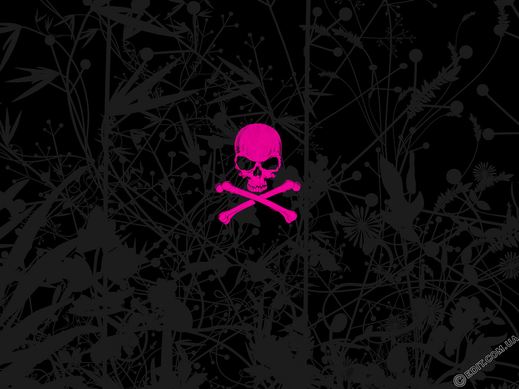 it 39 s hd animals funny wallpapers pink skull wallpapers
