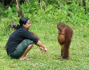 Imágenes Graciosas de Animales, Chimpancé