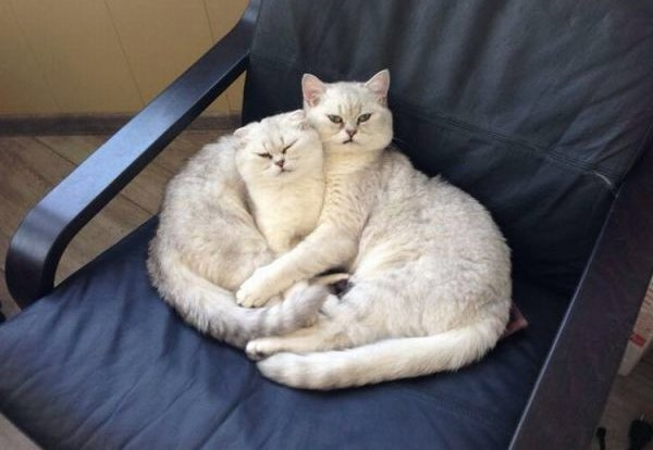 Funny cats - part 171, cat photos, cute cat pictures, adorable cats