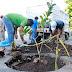 Ayuntamiento reforesta tramo sur de Prolongación Montejo