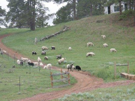 girls in pasture