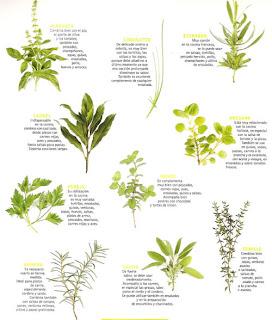 Naturista de coraz n comida natural y saludable - Plantas aromaticas en la cocina ...
