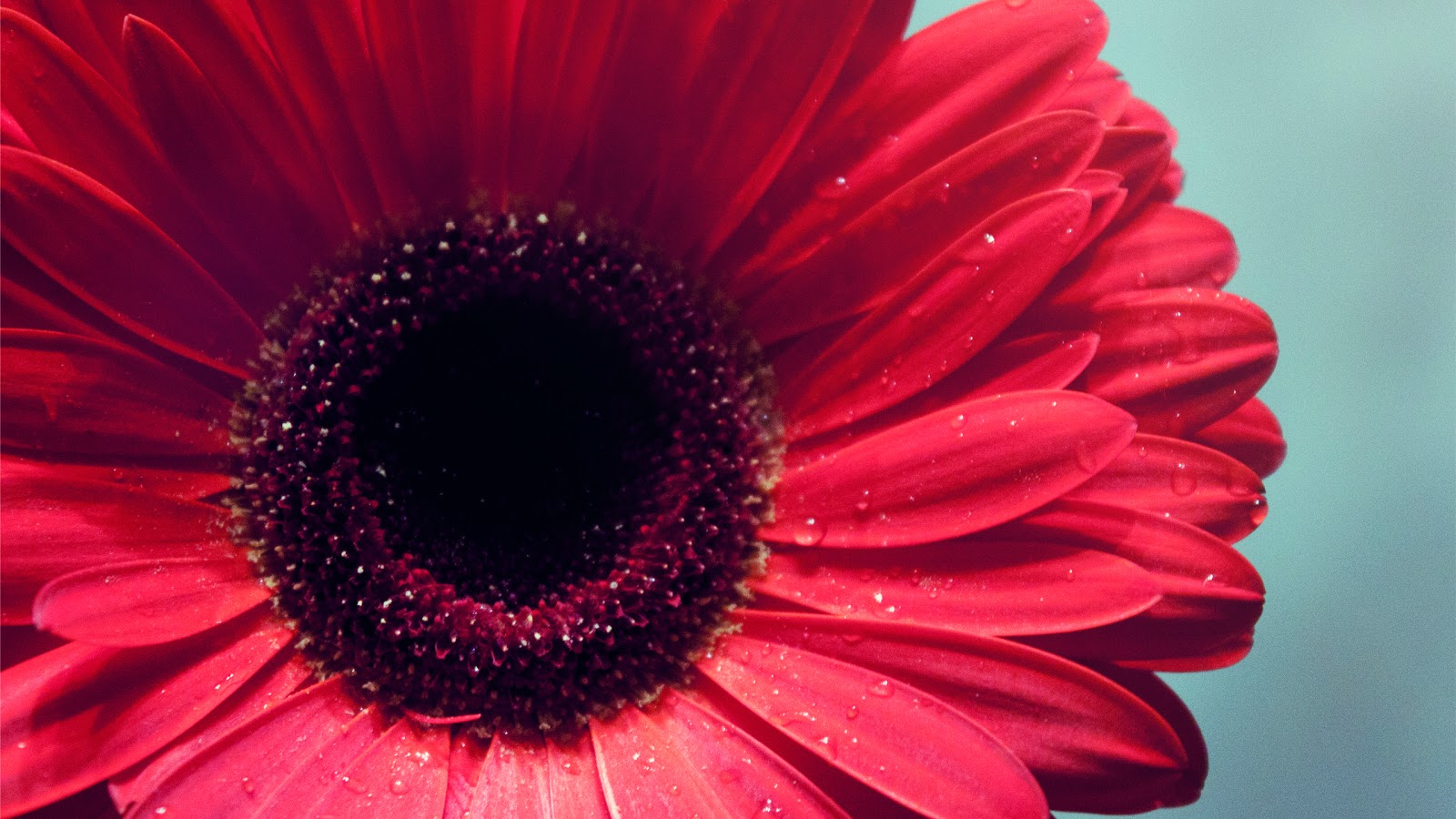 http://1.bp.blogspot.com/-LL-DifU2nhY/TZpBGLj_GbI/AAAAAAAAHk8/VJcLT4Jd8I0/s1600/Epic+Red+Flower+Nature+Wallpapers+2560x1440.jpg