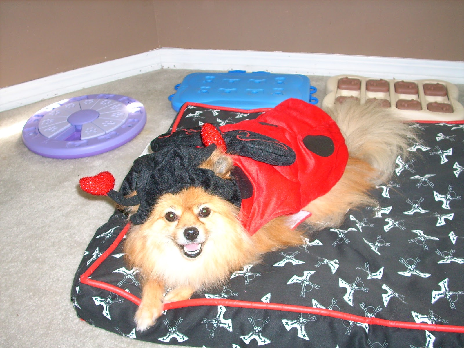 My pals at PetSmart sent this adorable Top Paw Pet Halloween Ladybug costume to me! & Pepperu0027s Paws: Top Paw Halloween Costume From PetSmart - Product Review