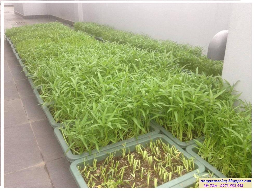 Khay trồng rau sạch giá 60.000đ
