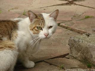 고양이(Cat looking at me)