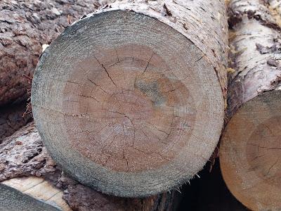 кольца на дереве