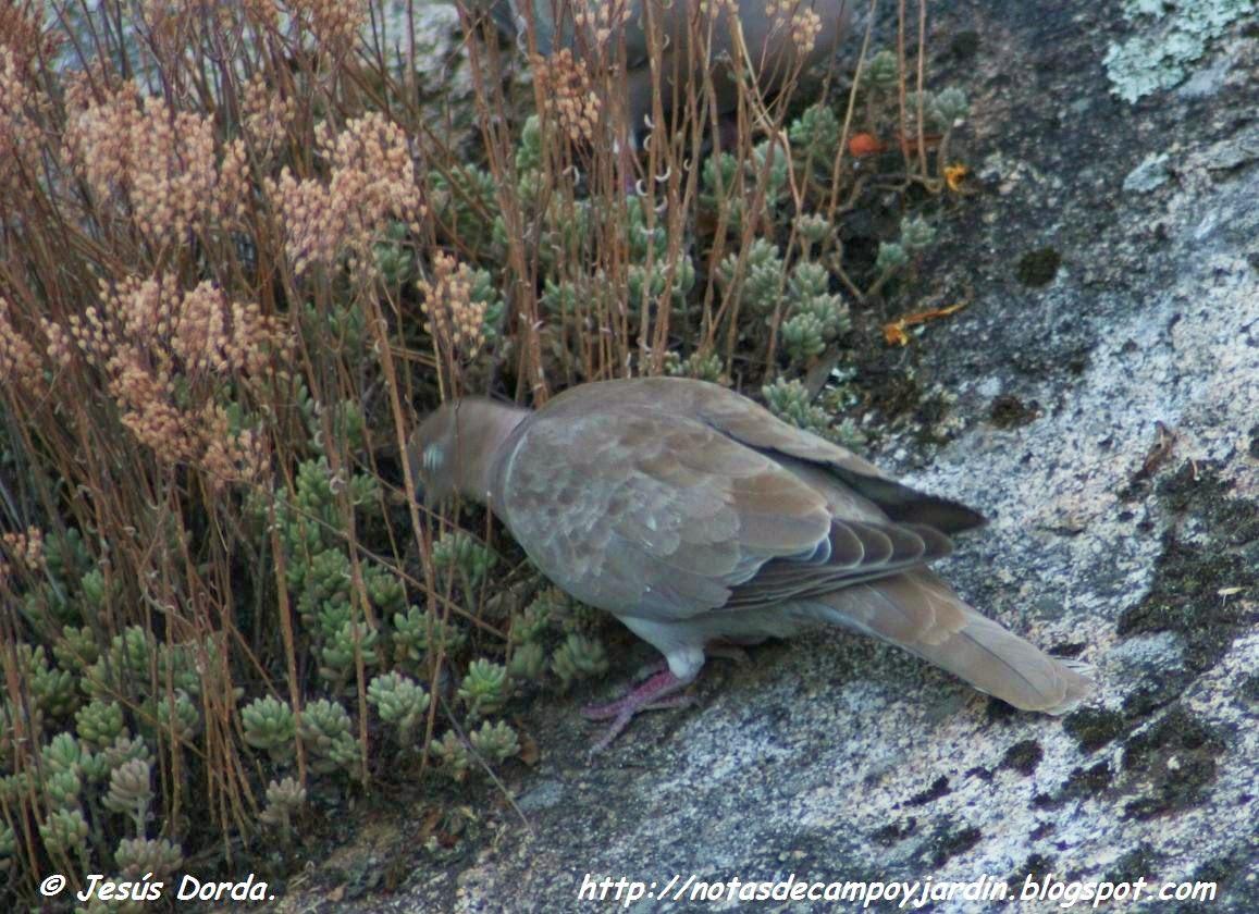 Notas de campo y jard n aves invitadas a comer en el jard n for Aves de jardin