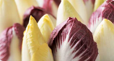 winter superfoods to eat - chicories