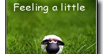 living by lysa a bit sheepish