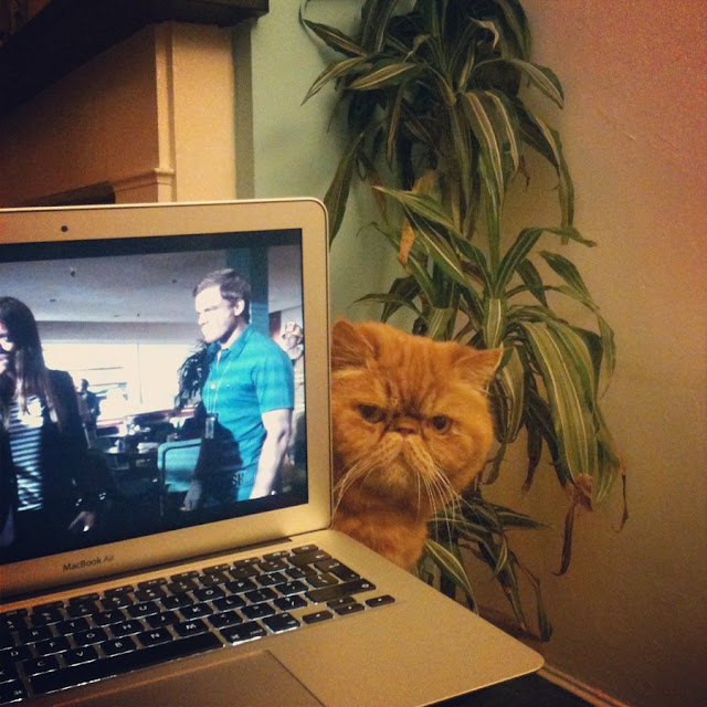 Funny cats - part 47, funny cat pictures, cat pictures, cute cats