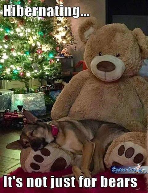 funny cute dog nap