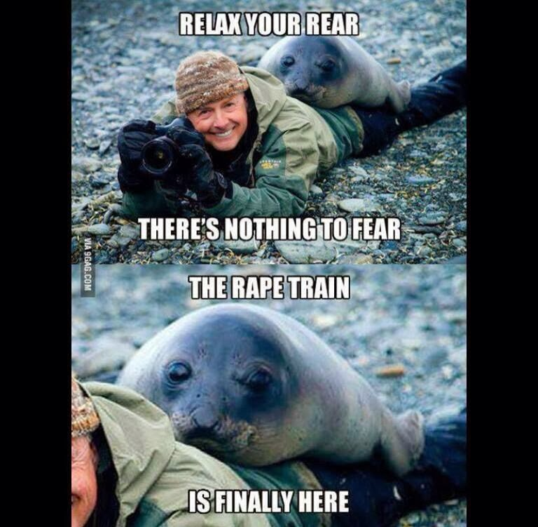 30 Funny animal captions - part 19 (30 pics), seal the raper, seal meme, seal pic with funny caption