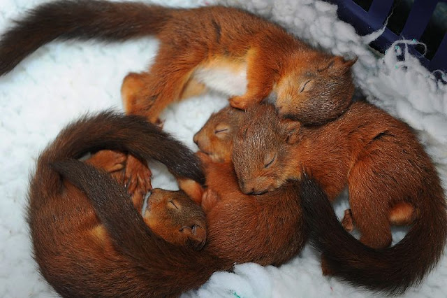 baby animals, cute animals, baby squirrel