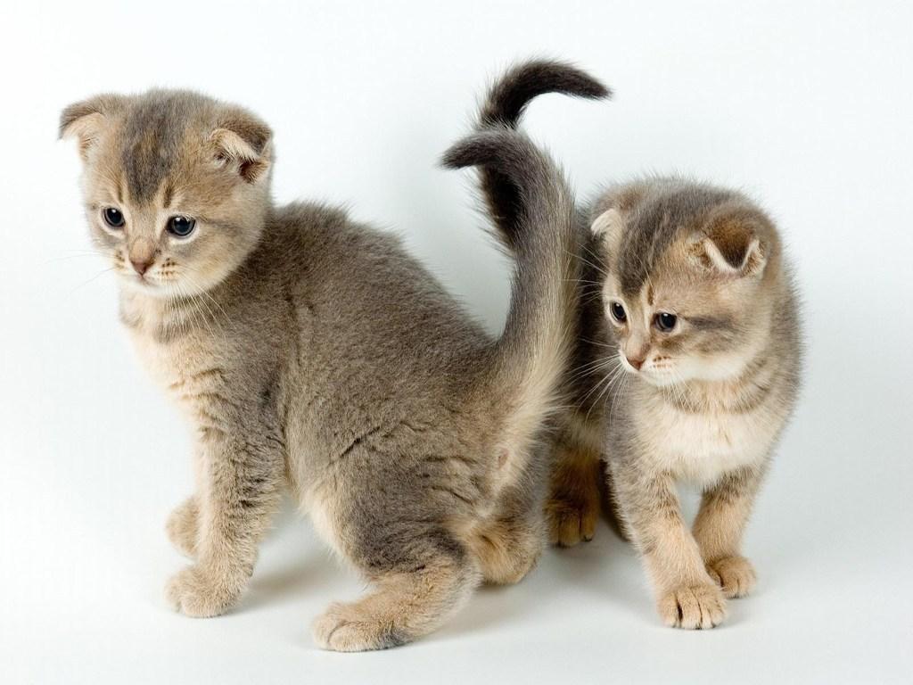 Olhar vira lata primeiros cuidados com filhotes de gatos - Cuidados gato 1 mes ...