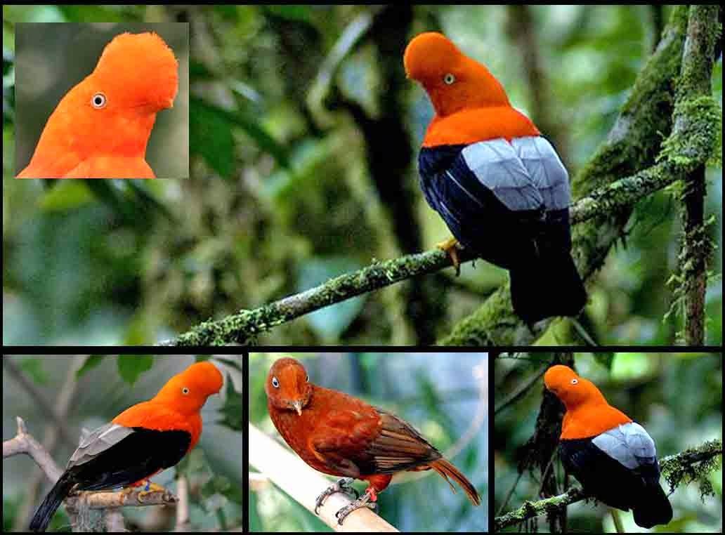 Foto Aneka Jenis Burung Indah