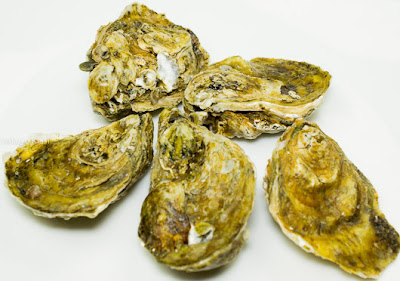 Photo of five whole oysters