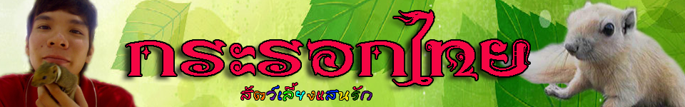 กระรอกไทยสัตว์เลี้ยงแสนรัก