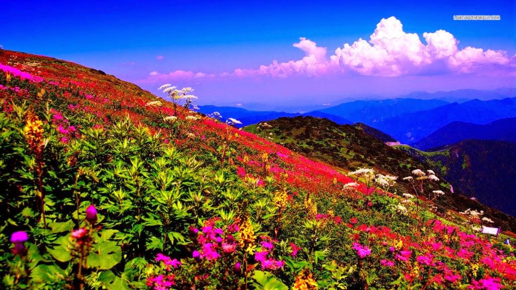 hình nền thiên nhiên cực đẹp