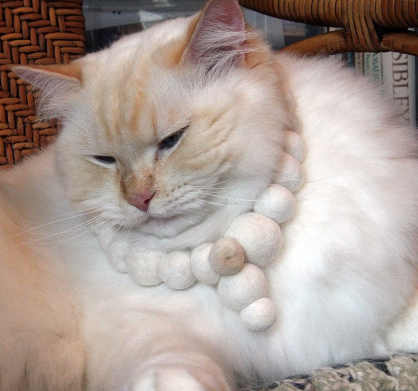 Catsparella  Cat Hair Jewelry By Flora Davis