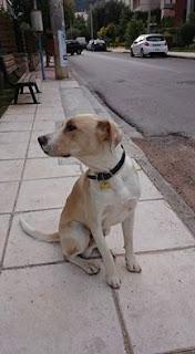 Ο σκύλος αυτός τριγυρνάει δυο πρωινά τώρα στου Παπάγου κοντά στο ΑΒ και φαίνεται χαμένος. Στο περιλαίμιό του γράφει SAWYER. Τον αναζητά κανείς;
