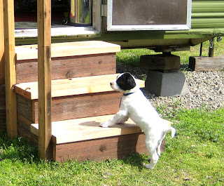 onelovejourney2012, one love journey, 1lovejourney, Mr. Marley, puppy climbing stairs
