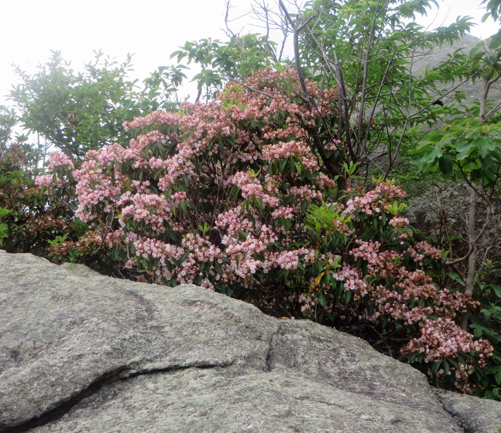 Old Rag Mountain Closed: NOT FROM THIS WEEKEND