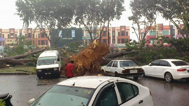 pokok tumbang atas kereta