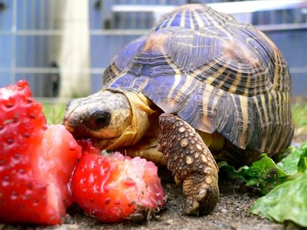 Những chú rùa thích màu sắc sặc sỡ