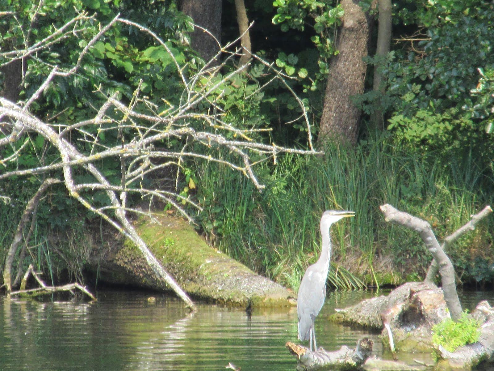 Natur am Stienitz-See