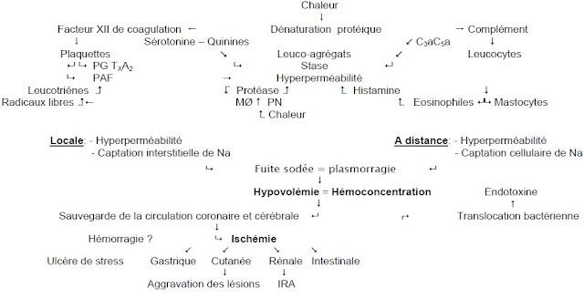 Physiopathologie des brulures - Cours Medecine Urgences - Blog Du Chalet