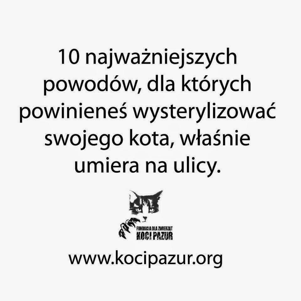 Fundacja Koci Pazur
