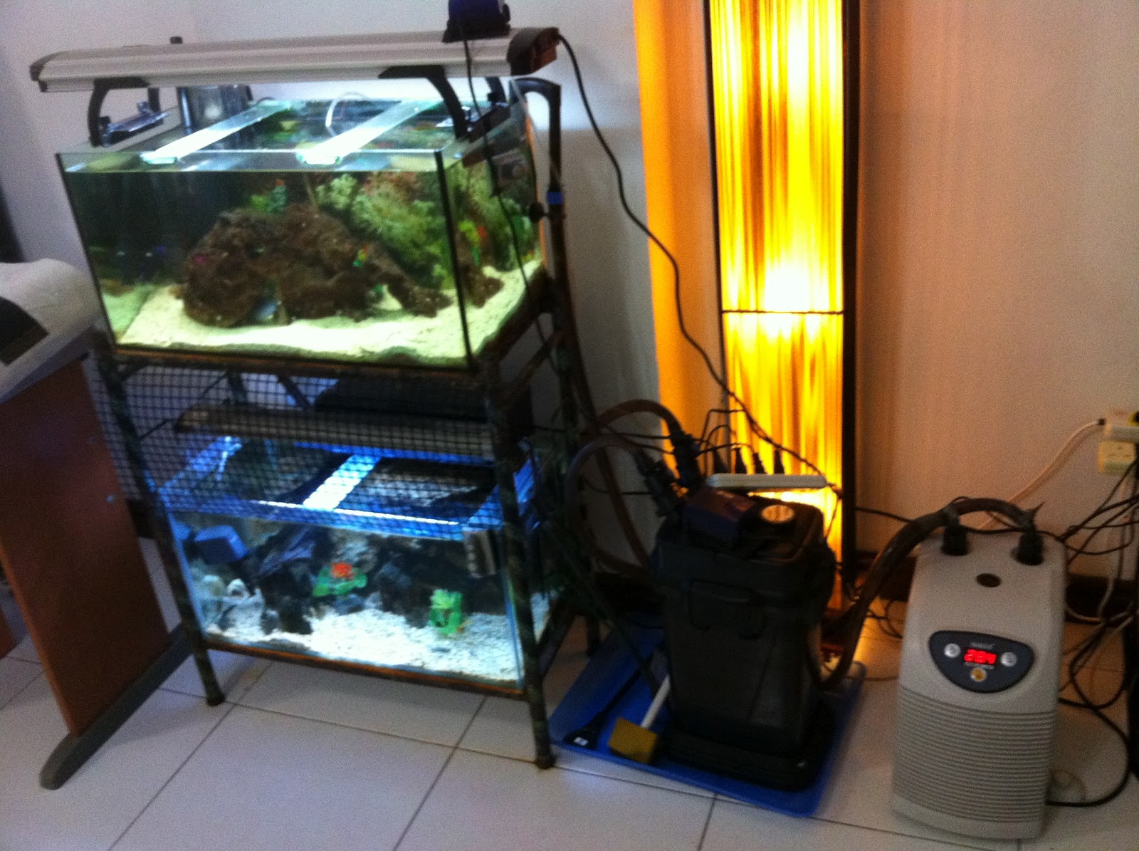 Fish aquarium in johor bahru - Reef Tank With Some Coral Added