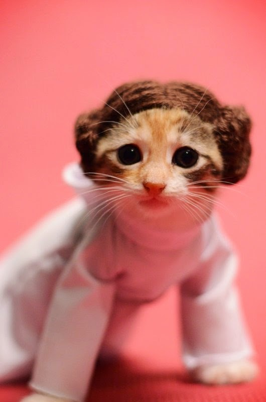 Kitten dress up in princess costume