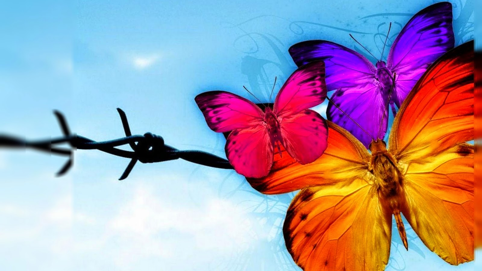 Butterfly 3D color
