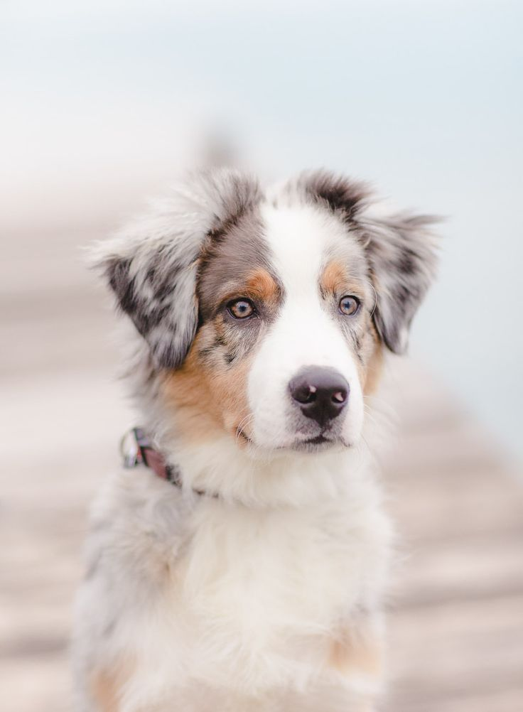 cute dogs and cats  5 dog breeds for the active owner