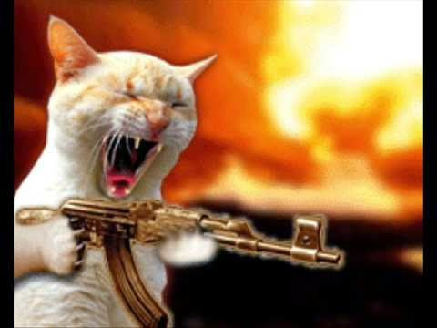 Funny Cat HD Pictures