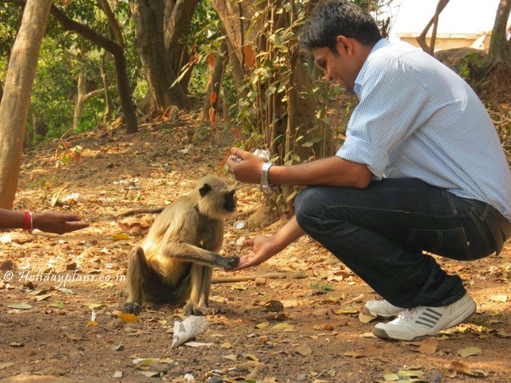 Divyam feeding Langoor