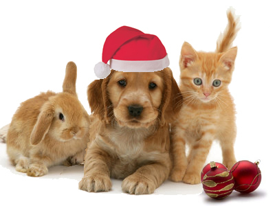 Cute christmas animals - photo#5